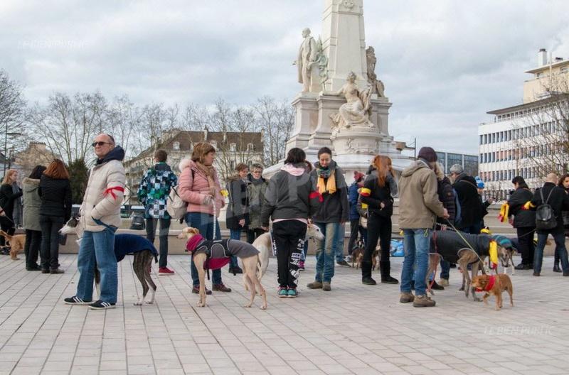 Marche à Dijon contre le martyr des lévriers d'Espagne   Image316