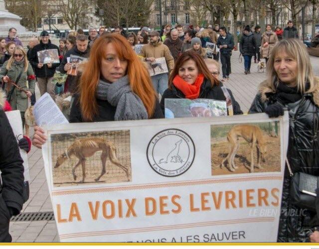 Marche à Dijon contre le martyr des lévriers d'Espagne   Image317