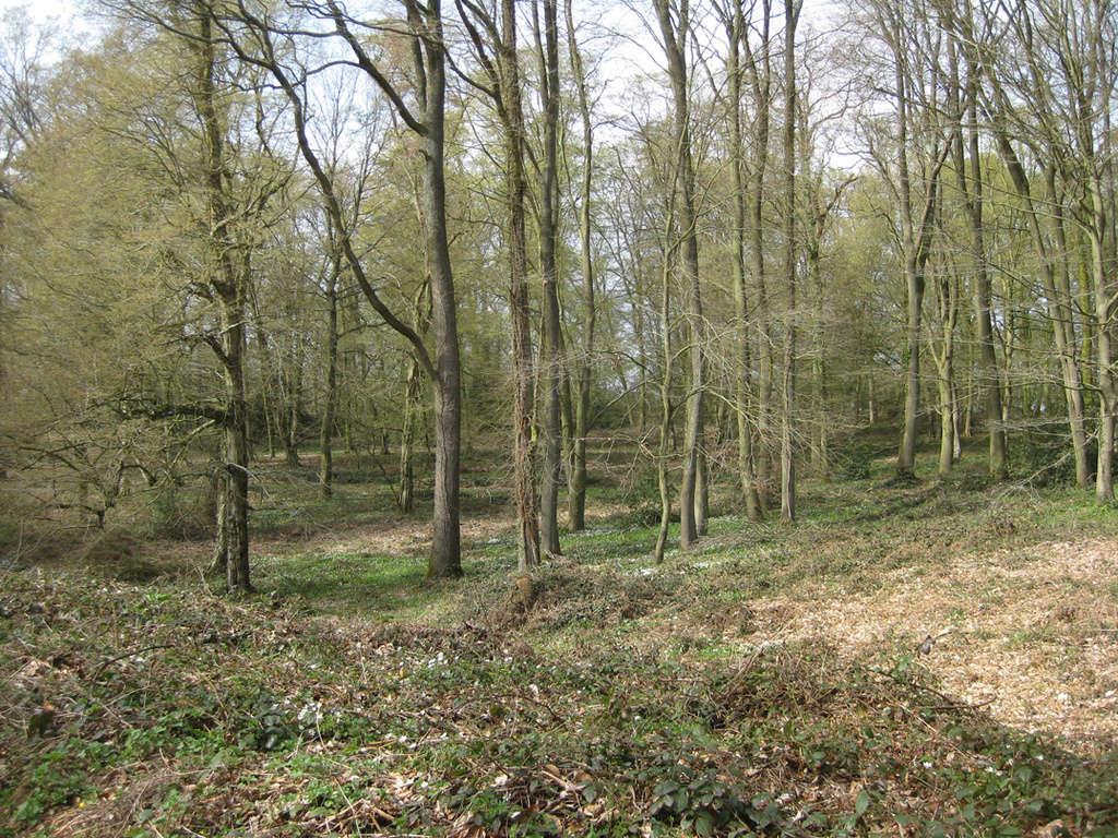 Sortie dans l'Oise forêt de Retz 12-pay10