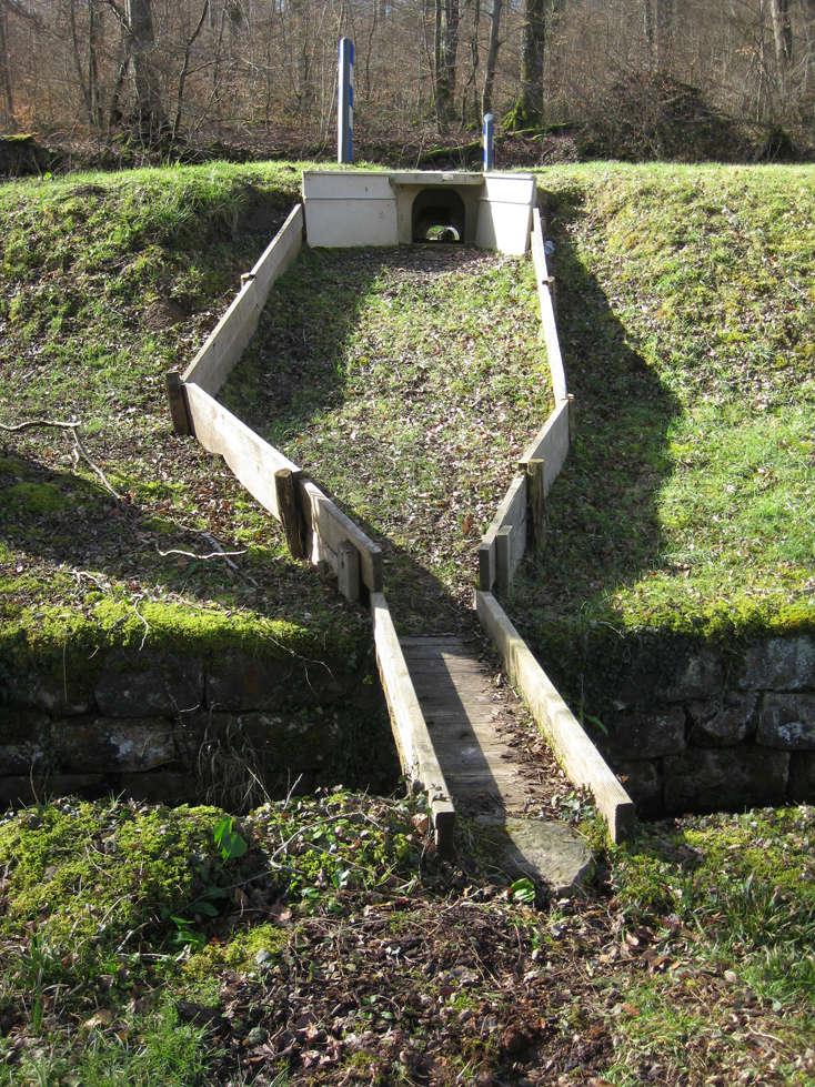 Sortie dans l'Aisne 14_cra10