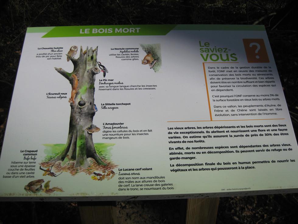 Sortie dans l'Aisne 17-pan10