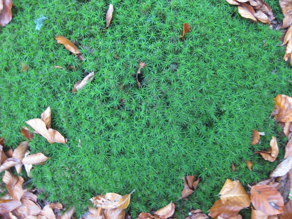 Sortie forêt de Retz (Aisne) 17_mou10