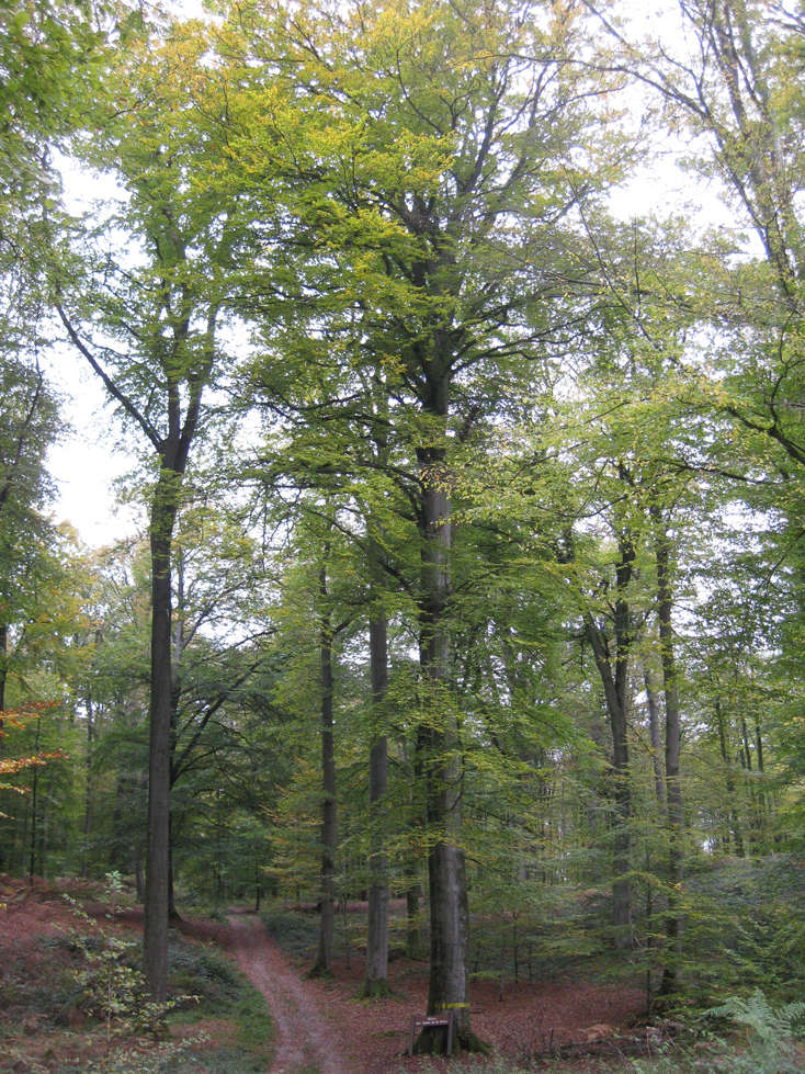 Sortie forêt de Retz (Aisne) 18_arb10