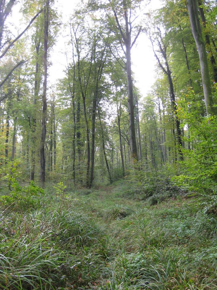 Sortie forêt de Retz (Aisne) 1_depa10