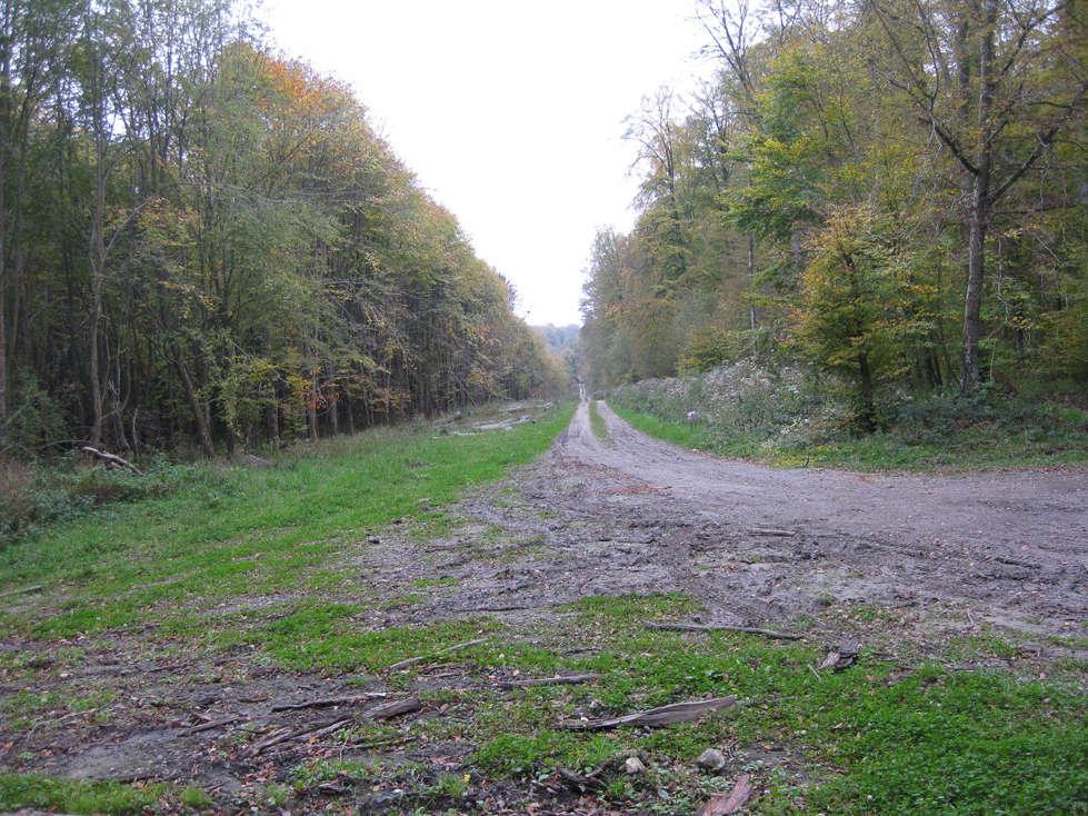 Sortie forêt de Retz (Aisne) 20_che10
