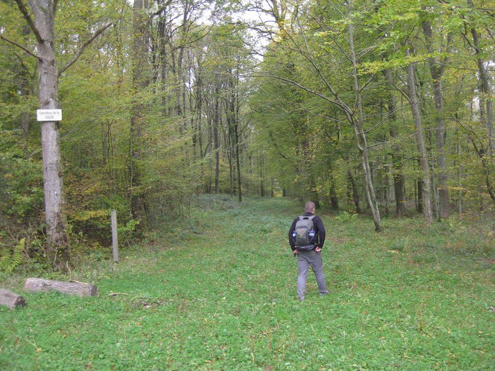 Sortie forêt de Retz (Aisne) 21_che10