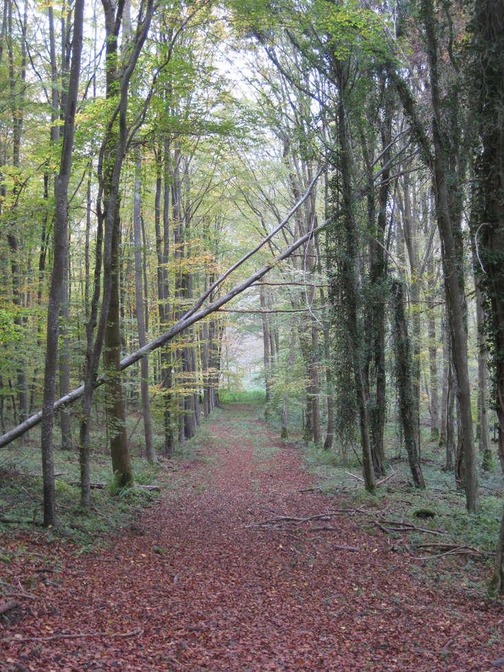 Sortie forêt de Retz (Aisne) 22_che10