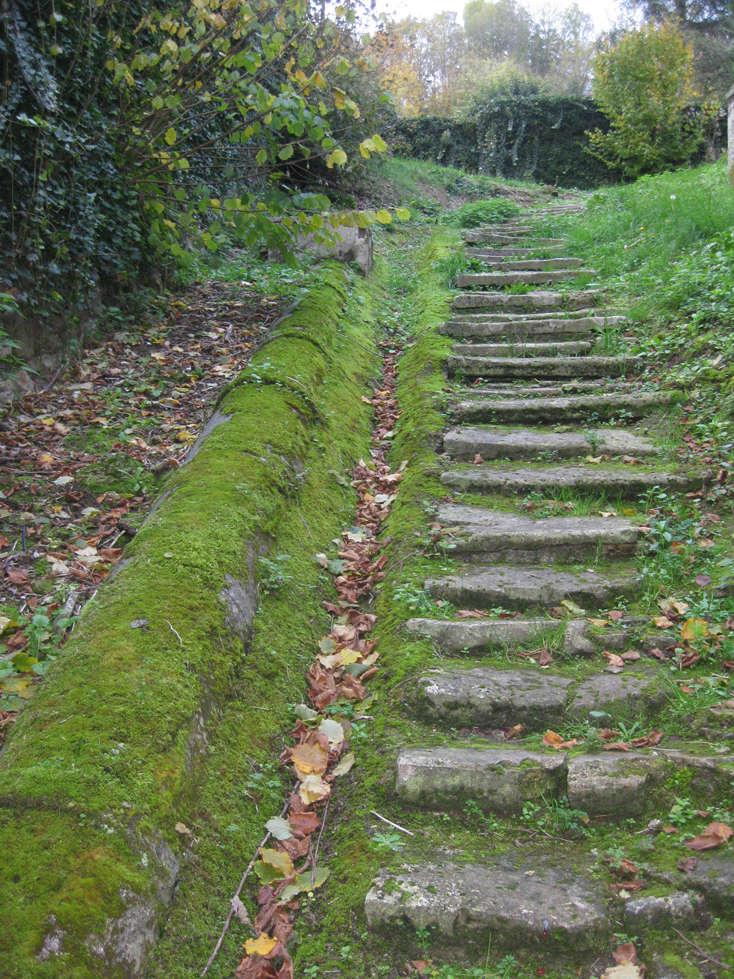 Sortie forêt de Retz (Aisne) 28_che10