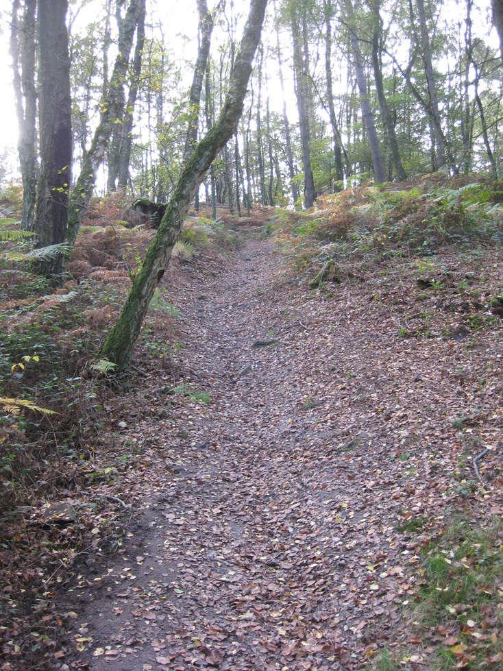 Sortie forêt de Retz (Aisne) 2_sent10