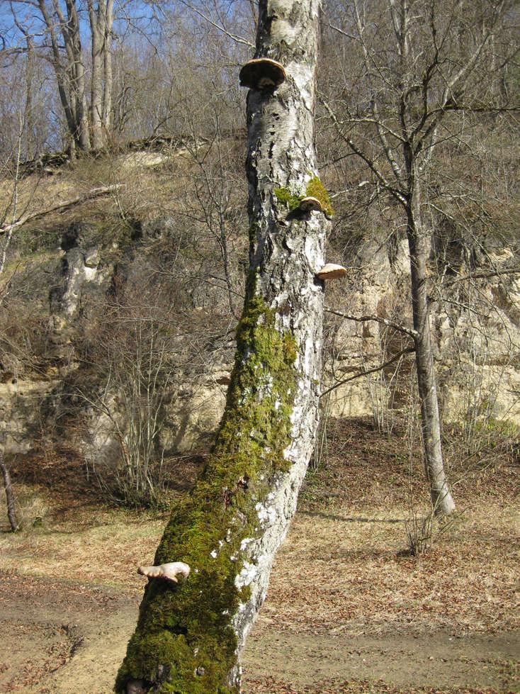 Sortie dans l'Aisne 6-arbr10