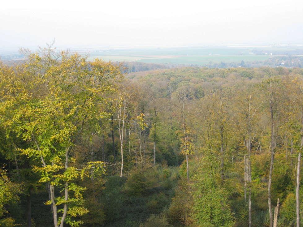 Sortie forêt de Retz (Aisne) 7_vue10