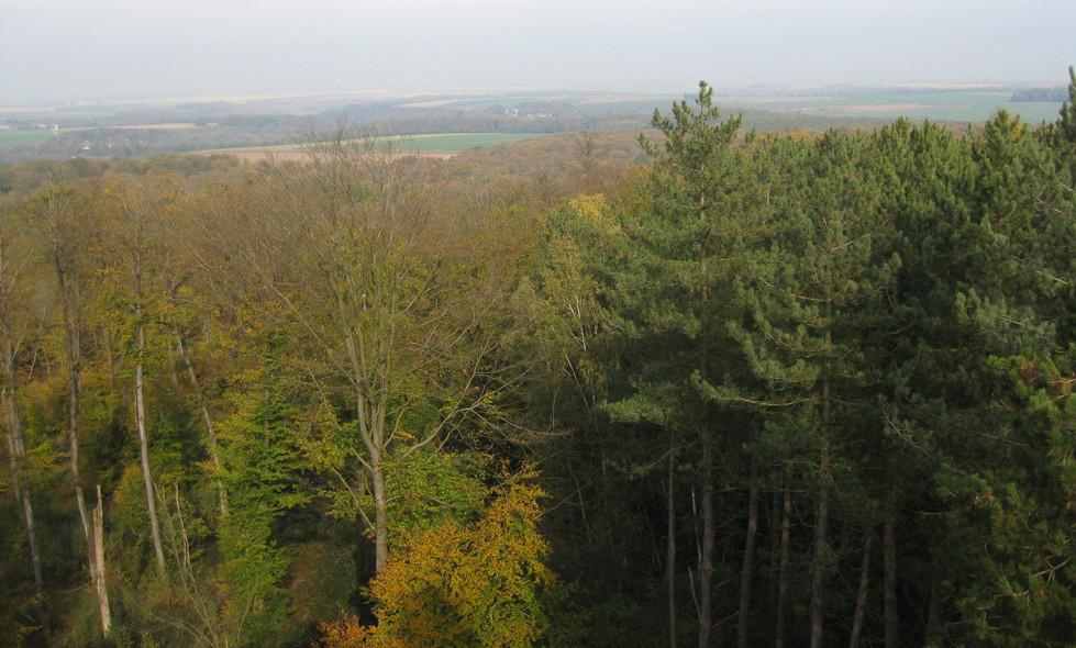 Sortie forêt de Retz (Aisne) 8_pano10