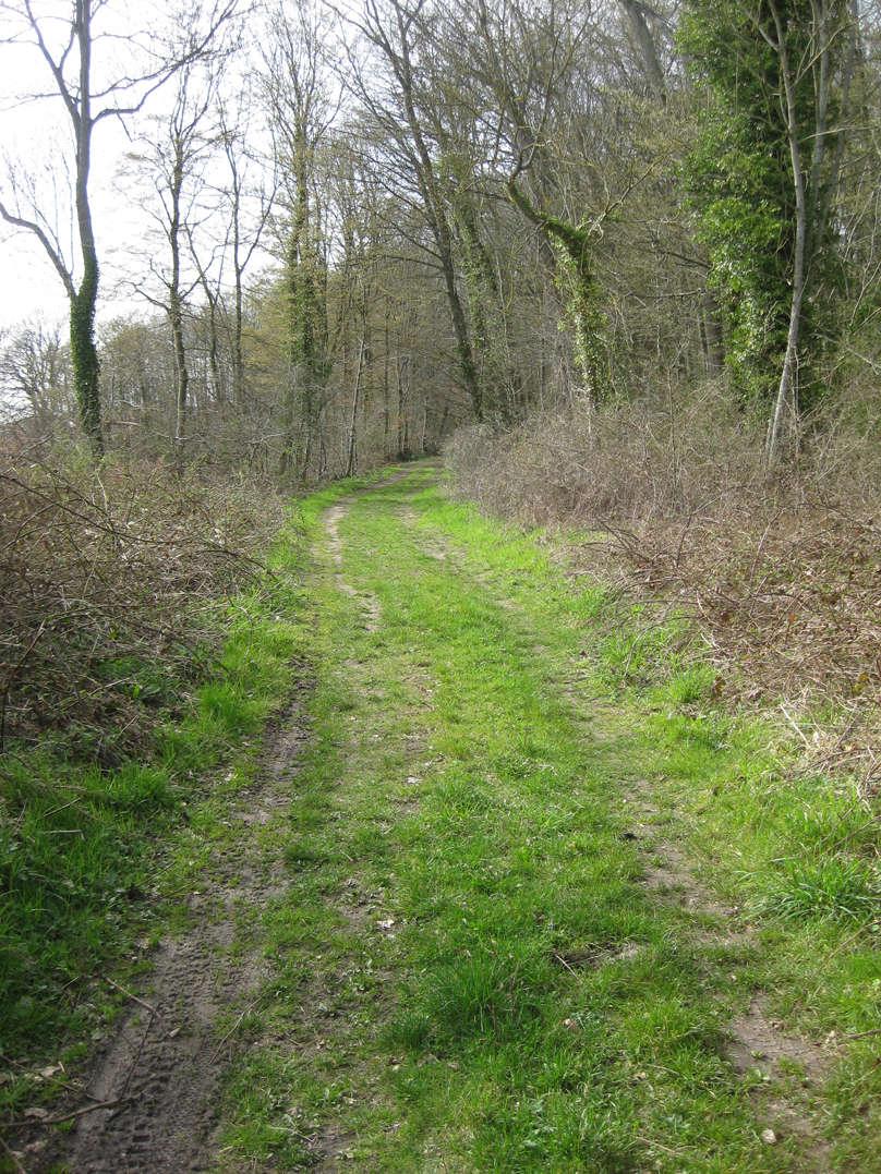 Sortie dans l'Oise forêt de Retz 9_chem10