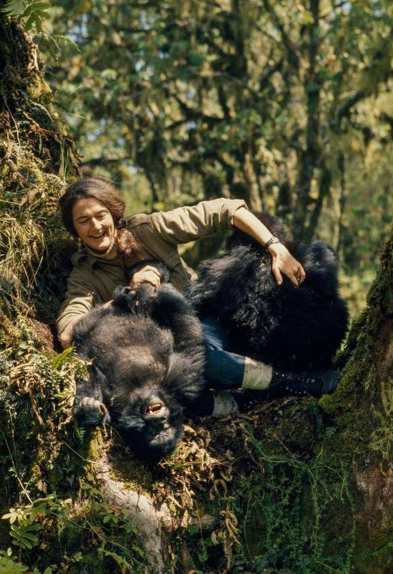 Dian Fossey : secret dans la brume 07-dia10