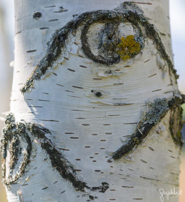 Regards sur les écorces d'arbres _dsc6412