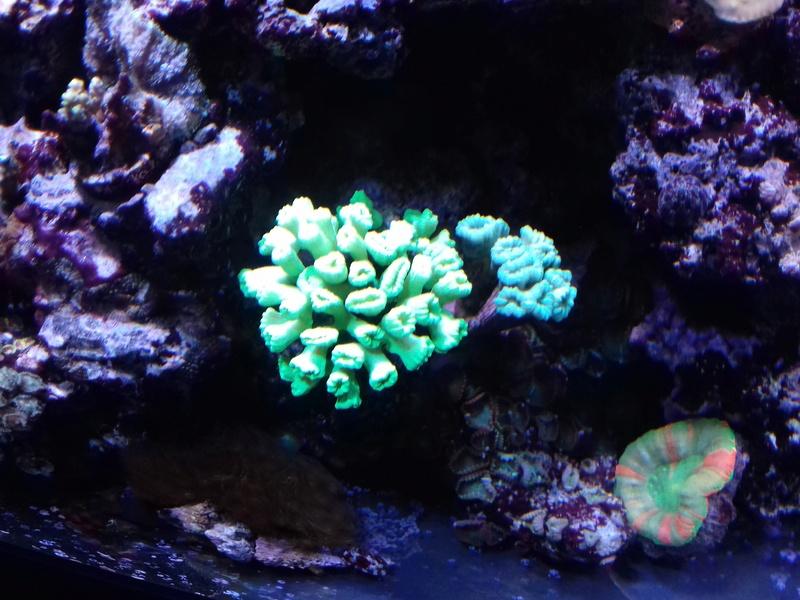 Couleur des coraux  20180121