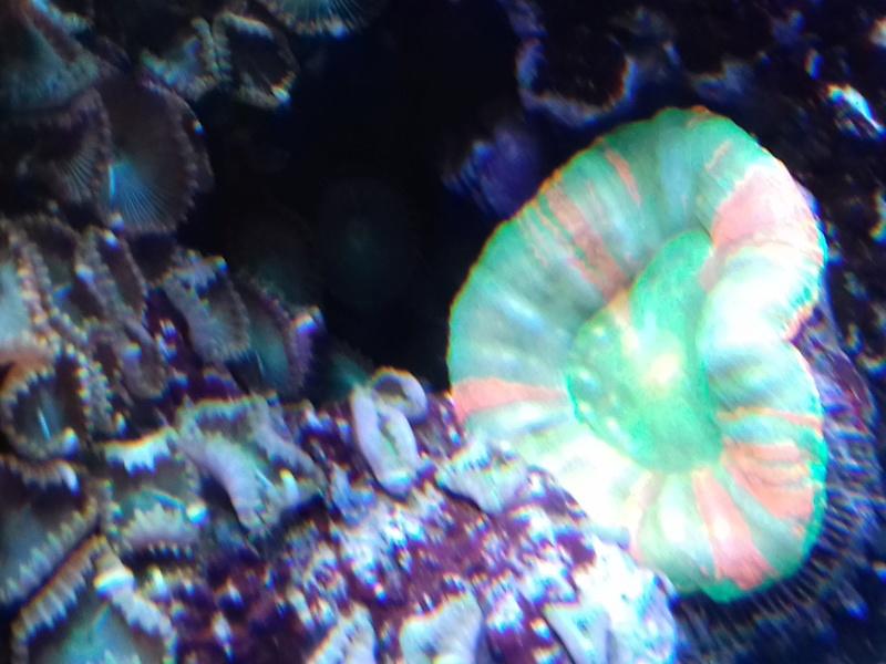 Couleur des coraux  20180126
