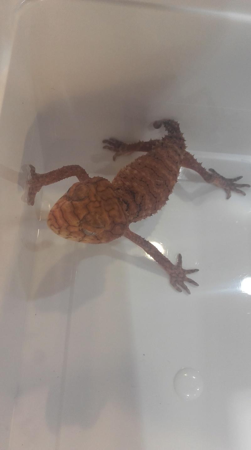 8ème bourse aux reptiles de l'Association Terrariophile du Maine (ATM) 20170927
