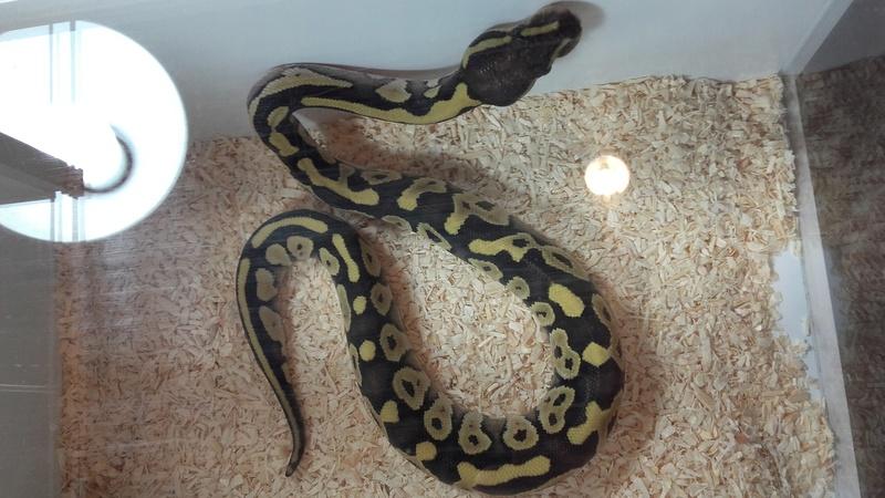 8ème bourse aux reptiles de l'Association Terrariophile du Maine (ATM) 20170930