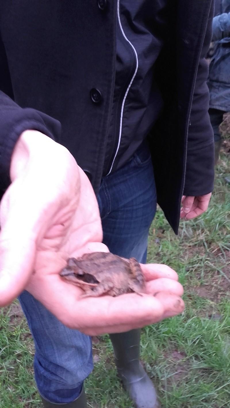 """Mission Ma participation à """"Amphibiens : Participez au suivi scientifique du passage à petite faune """" à Cré-sur-Loir (72) 20180211"""