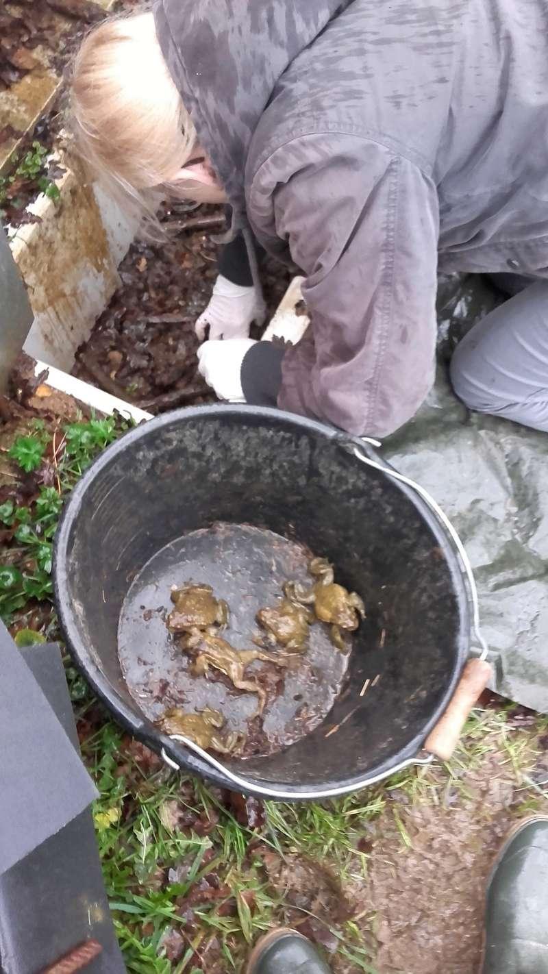 """Mission Ma participation à """"Amphibiens : Participez au suivi scientifique du passage à petite faune """" à Cré-sur-Loir (72) 20180219"""