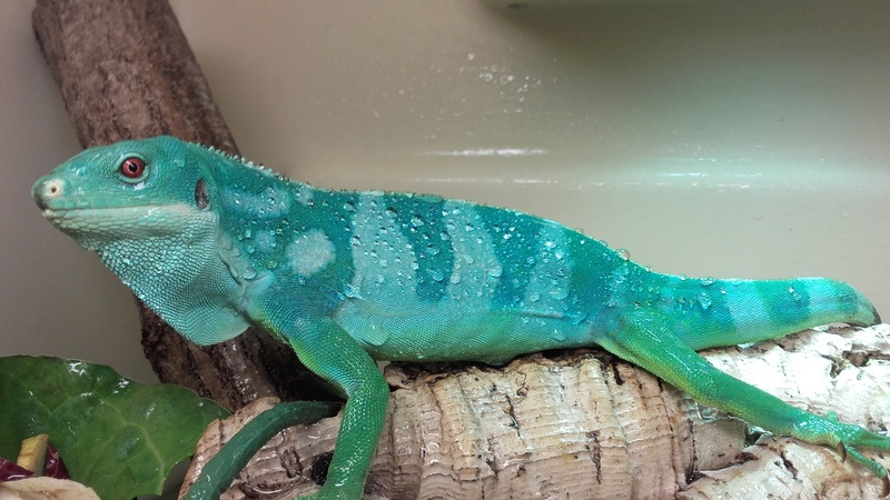Récit formation CDC Geckobaro 20180510