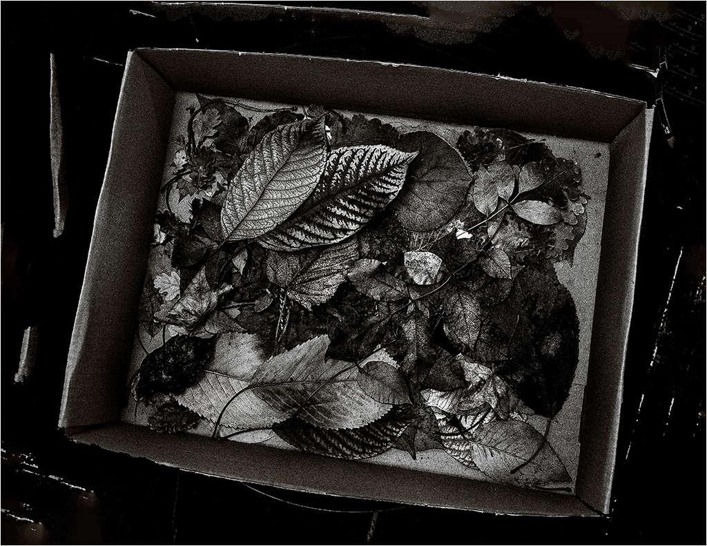 """"""" Le carton de feuilles """" _1120110"""