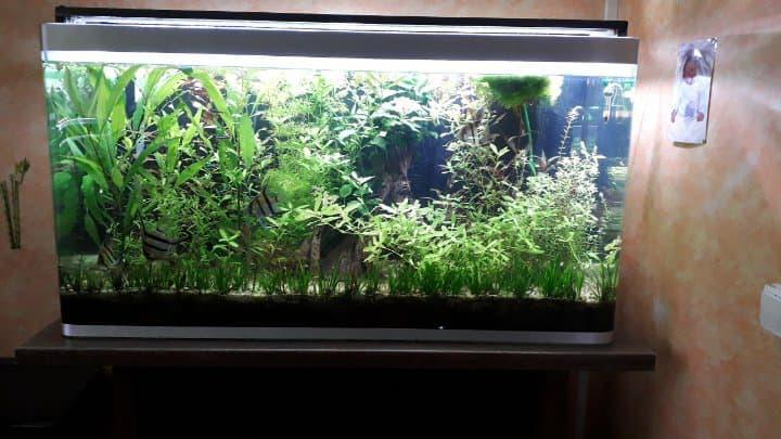 éclairage pour mon aquarium fait maison  26235510