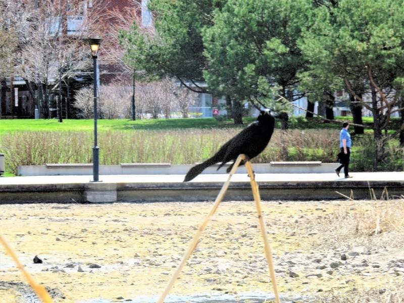 Vu au parc aujourd'hui Img_3914