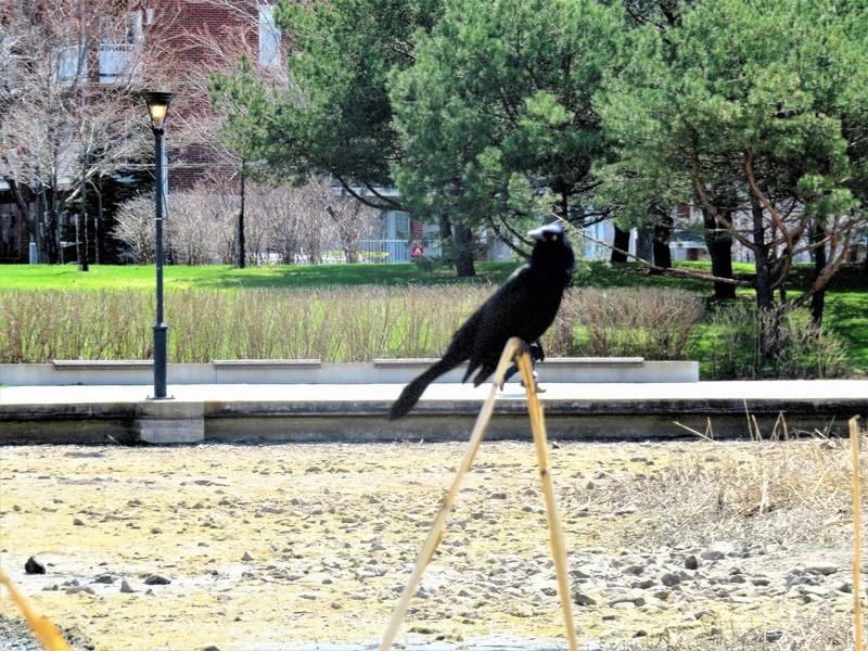 Vu au parc aujourd'hui Img_3915