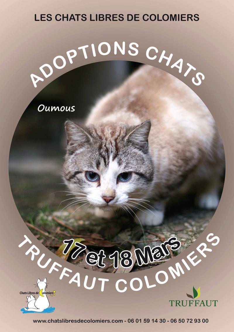 Week-end adoptions les 17 et 18 mars à Truffaut Colomiers 2018-029