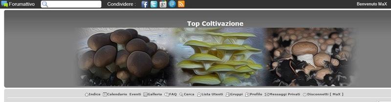 Top/logo Forum Cattur10