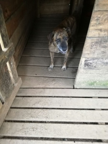 MC  Bosé - Hond aangereden Bosy_210