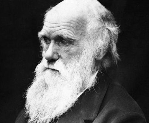 Evolucija - Page 3 Darwin10
