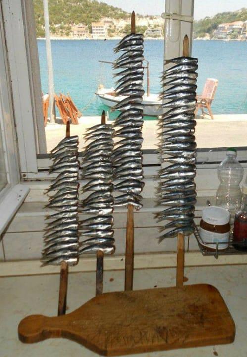 RIBA - MORSKA i SLATKOVODNA: vrste, zanimljivosti, pitanja, ribolov, recepti za pripremu... - Page 22 Riba_s10