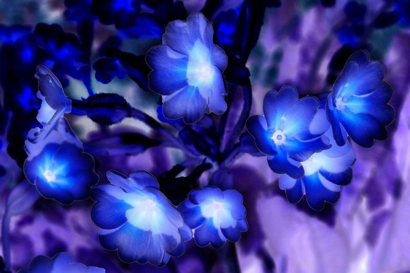 Ada & Wyn, a fény virágai Glowin10