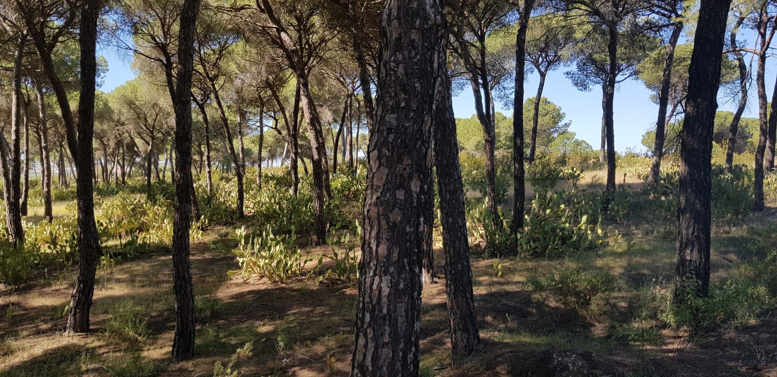 "Milsim 24h ""Black River"" | 30 junio - 1 julio | Lepe (Huelva) Whatsa16"