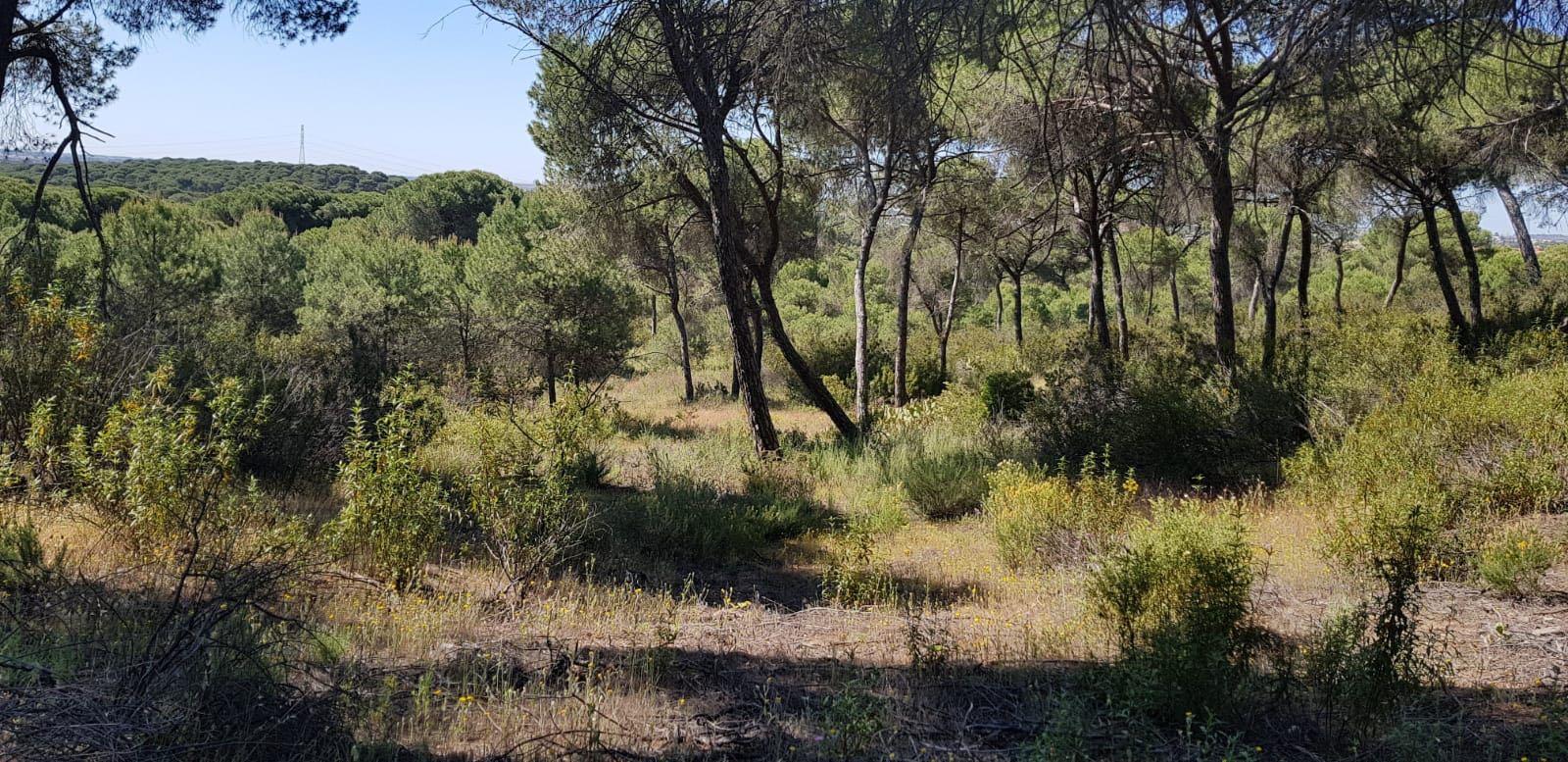 "Milsim 24h ""Black River"" | 30 junio - 1 julio | Lepe (Huelva) Whatsa19"