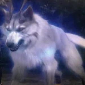 Seto (Kyron) Argenturr - Fianna - Ragabash Screen11