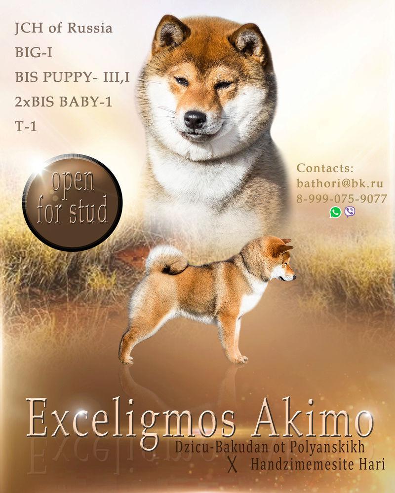 Exceligmos Akimo (Blin)  Shiba10