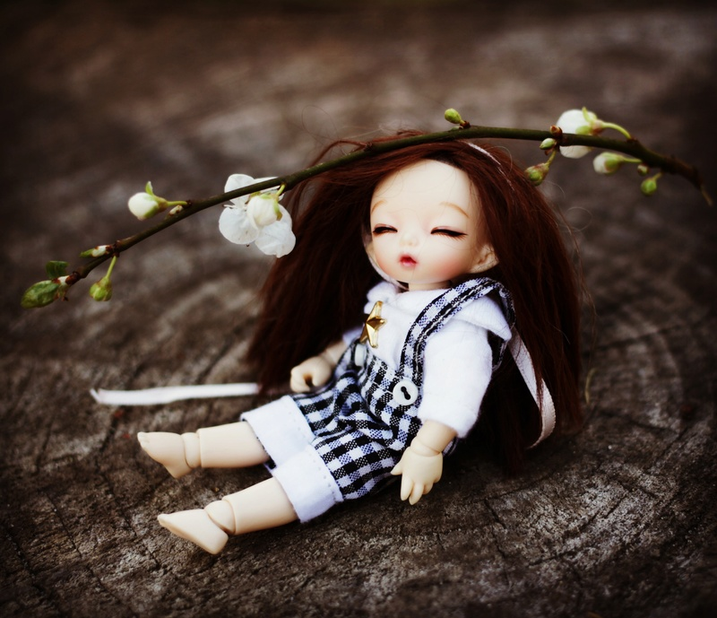 March of Dolls Flower10