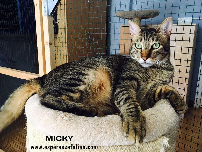 Micky y Canica, dos amores en adopción. (FN.Abril 2015) Álava 1gketh11