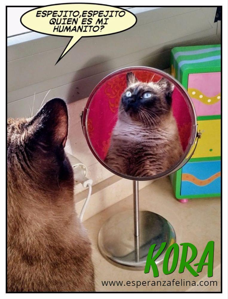 Kora, gata siamesa busca hogar, Álava (Fecha aprox. nacimiento 5/11) - Página 3 5nr7ob10