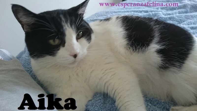 Aika, preciosa vaquita en adopción. (F.N: 01/01/12) Álava. Aika_211