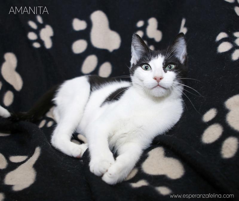 Amanita, dulce y preciosa cachorra en adopción (F.N: 08/09/17) Álava. Amanit11
