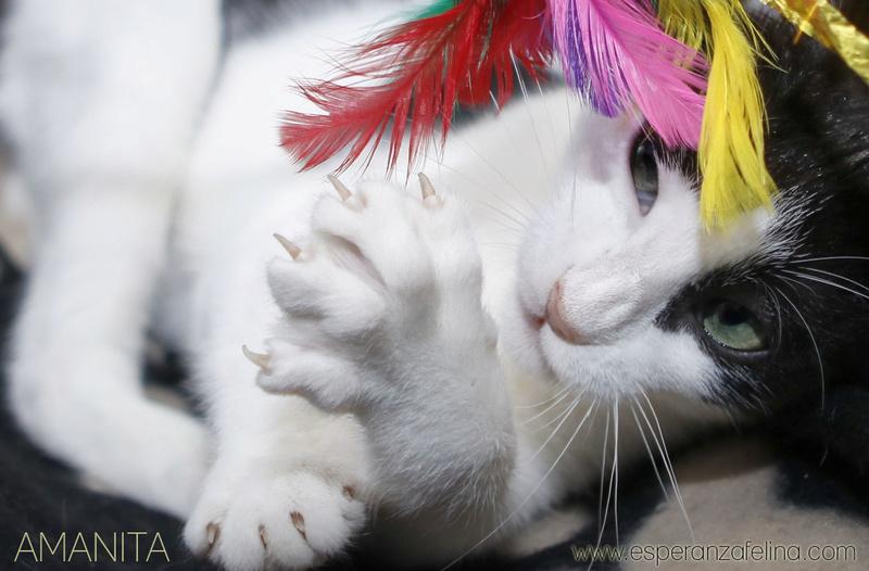 Amanita, dulce y preciosa cachorra en adopción (F.N: 08/09/17) Álava. Amanit12