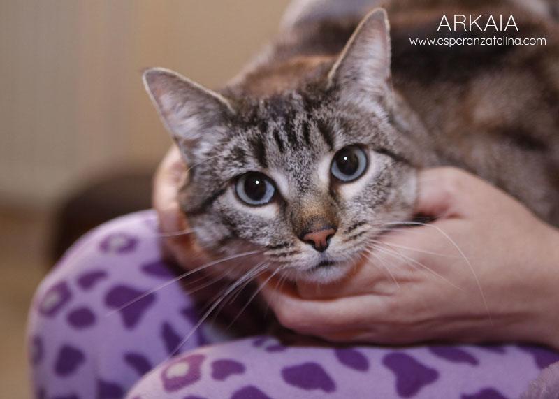 ARKAIA, gatita rescatada en la zona de Arkaiate (F.N. aprox: 1/01/2016) Álava Arkaia13