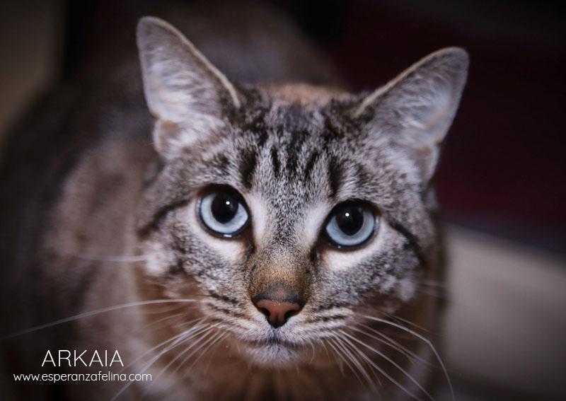 ARKAIA, gatita rescatada en la zona de Arkaiate (F.N. aprox: 1/01/2016) Álava Arkaia15