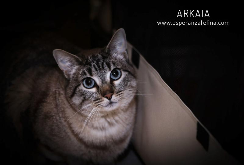 ARKAIA, gatita rescatada en la zona de Arkaiate (F.N. aprox: 1/01/2016) Álava Arkaia16