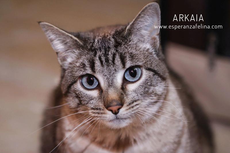 ARKAIA, gatita rescatada en la zona de Arkaiate (F.N. aprox: 1/01/2016) Álava Arkaia17